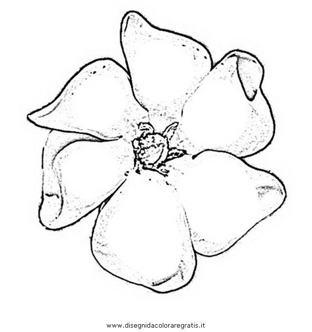 natura/fiori/gardenia_gardenie.JPG