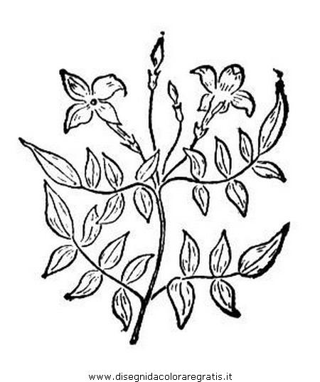 natura/fiori/gelsomino_gelsomini_02.JPG