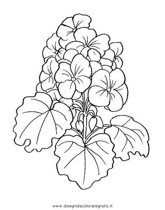 natura/fiori/geranio.JPG