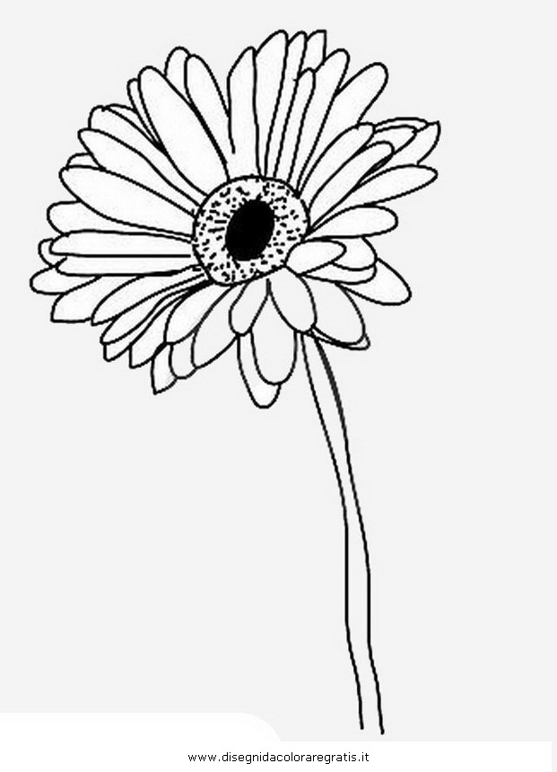 natura/fiori/gerbera_gerbere-2.JPG