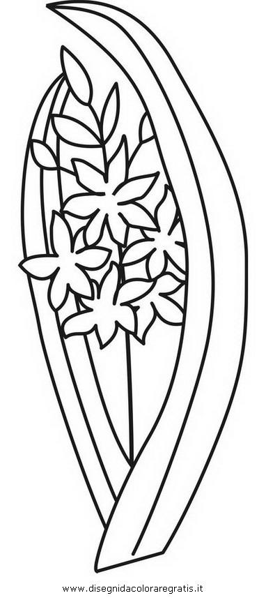 natura/fiori/giacinti_2.JPG