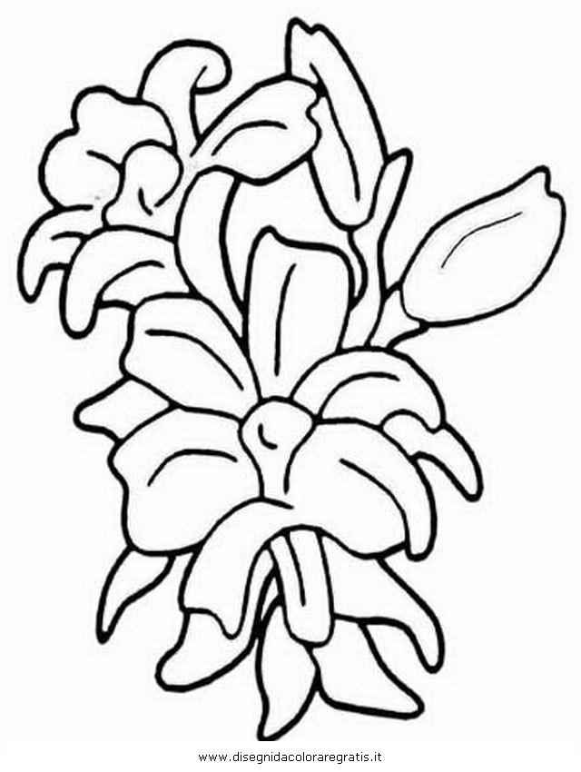 natura/fiori/gladiolo_gladioli.JPG