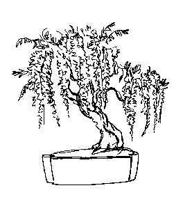 Disegno Glicinebonsai Categoria Natura Da Colorare