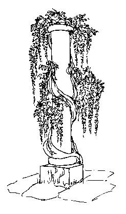 natura/fiori/glicine_colonna.jpg