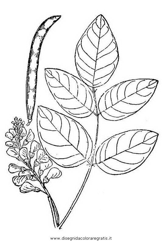 natura/fiori/glicine_tuberoso.JPG