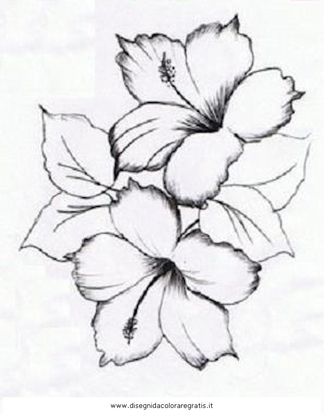 Hibiscus Flower Drawing Coloring Pages Hibiscus Coloring Pages