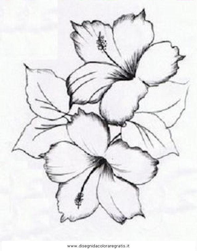 natura/fiori/ibisco_2.JPG