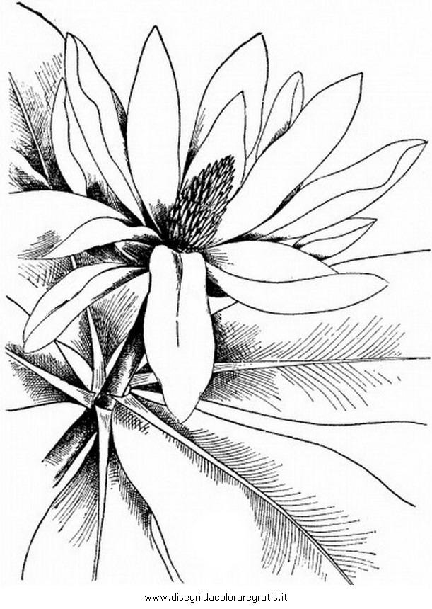 natura/fiori/magnolia_1.JPG