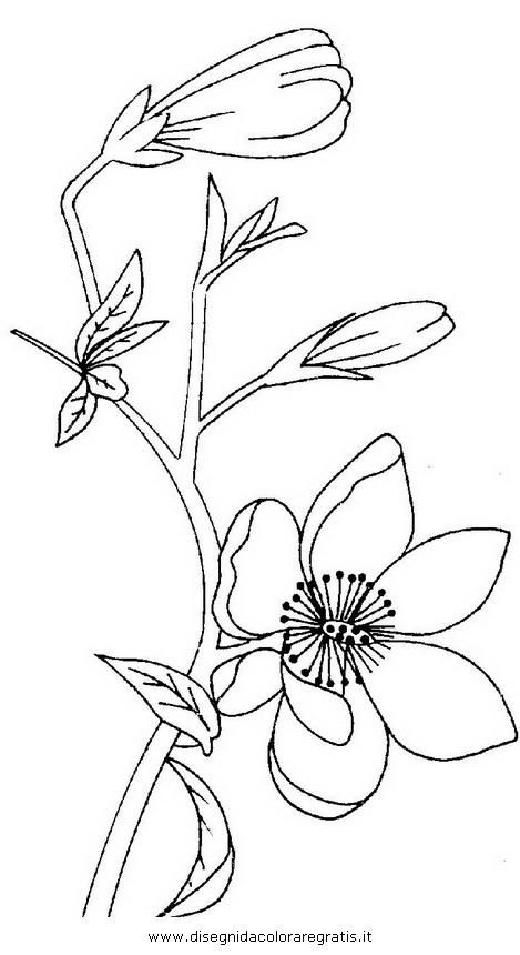 natura/fiori/magnolia_3.JPG