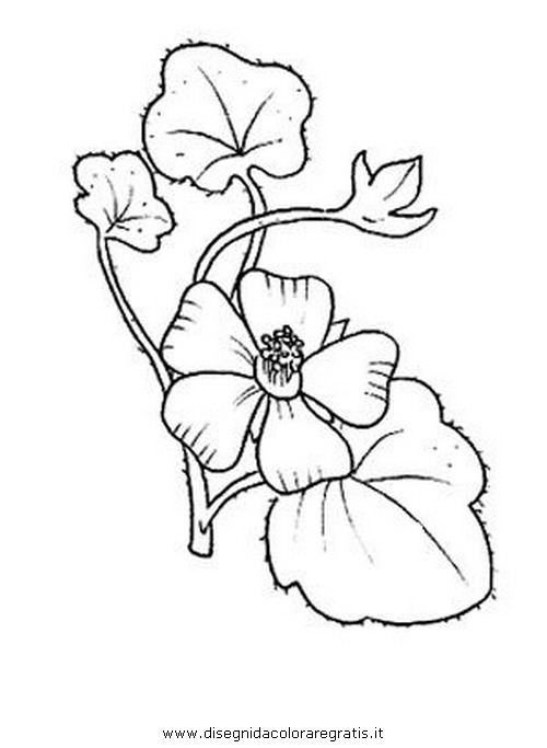 natura/fiori/malva.JPG