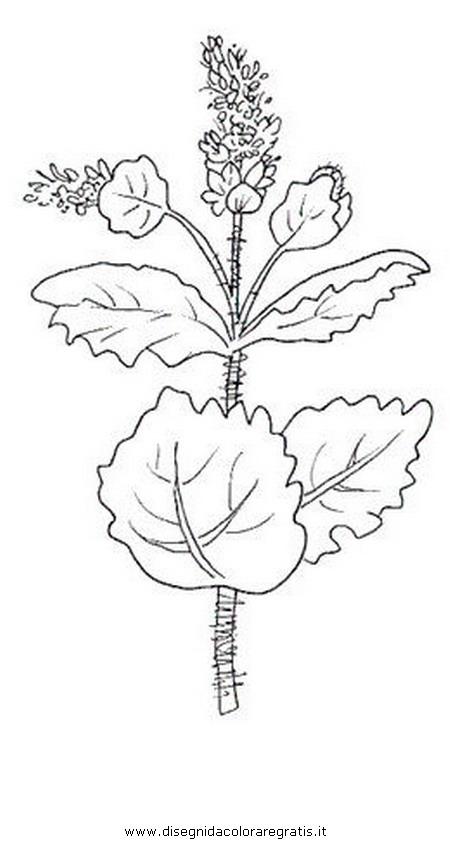 natura/fiori/menta.JPG