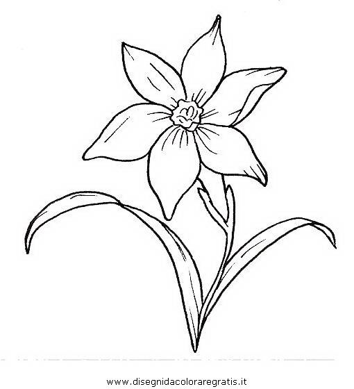 natura/fiori/narciso.JPG