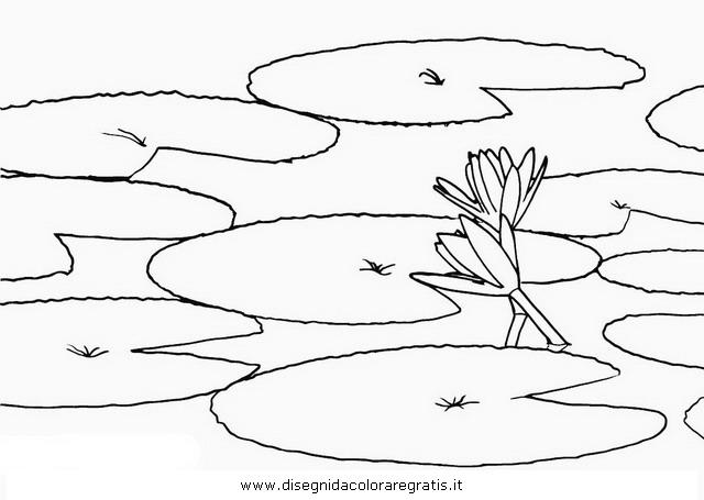 natura/fiori/ninfea_02.JPG