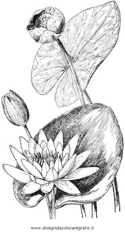 natura/fiori/ninfea_03.JPG