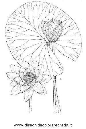 natura/fiori/ninfea_07.JPG