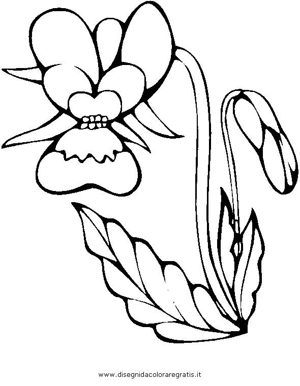 natura/fiori/orchidea_01.JPG