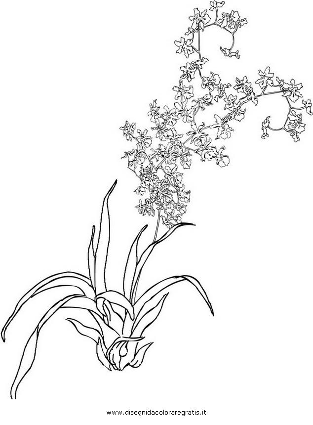 natura/fiori/orchidea_02.JPG