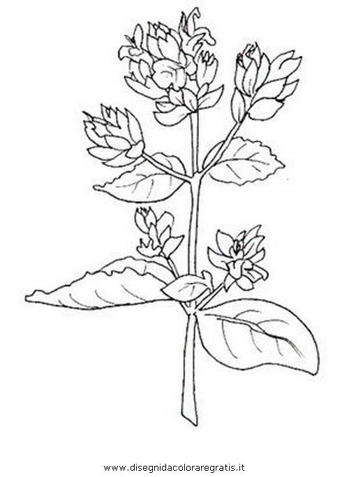 natura/fiori/origano.JPG