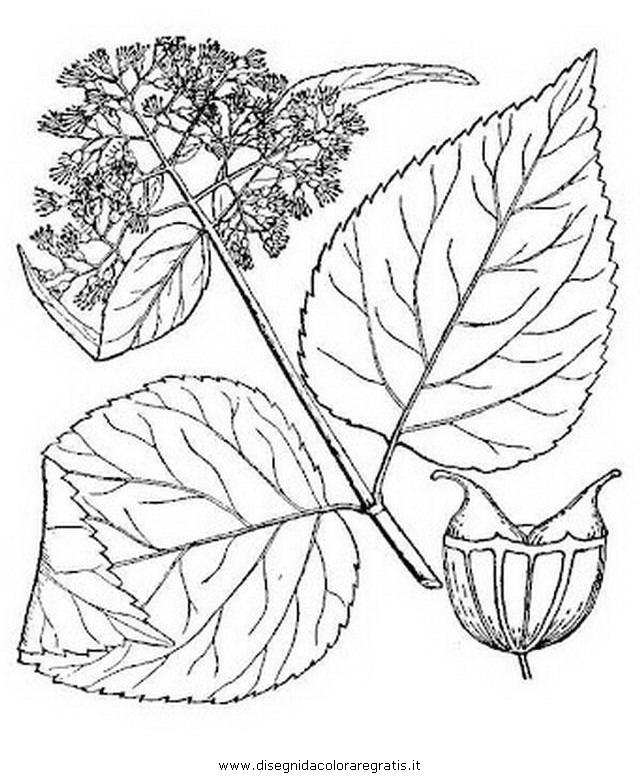 natura/fiori/ortensia_0.JPG