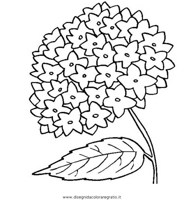 natura/fiori/ortensia_1.JPG