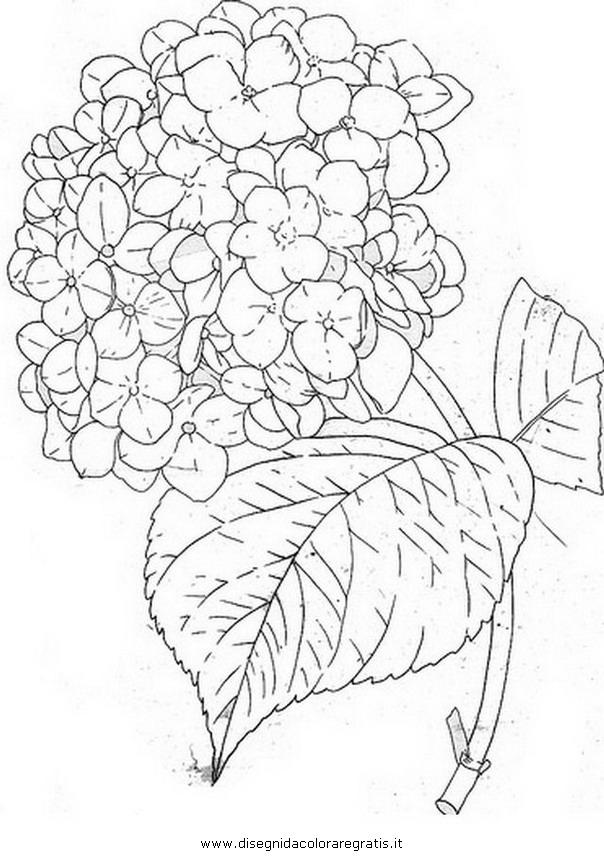 Disegno ortensia 2 categoria natura da colorare for Disegno vaso da colorare