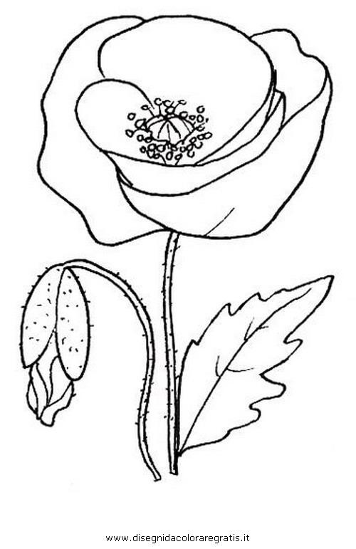 natura/fiori/papavero.JPG
