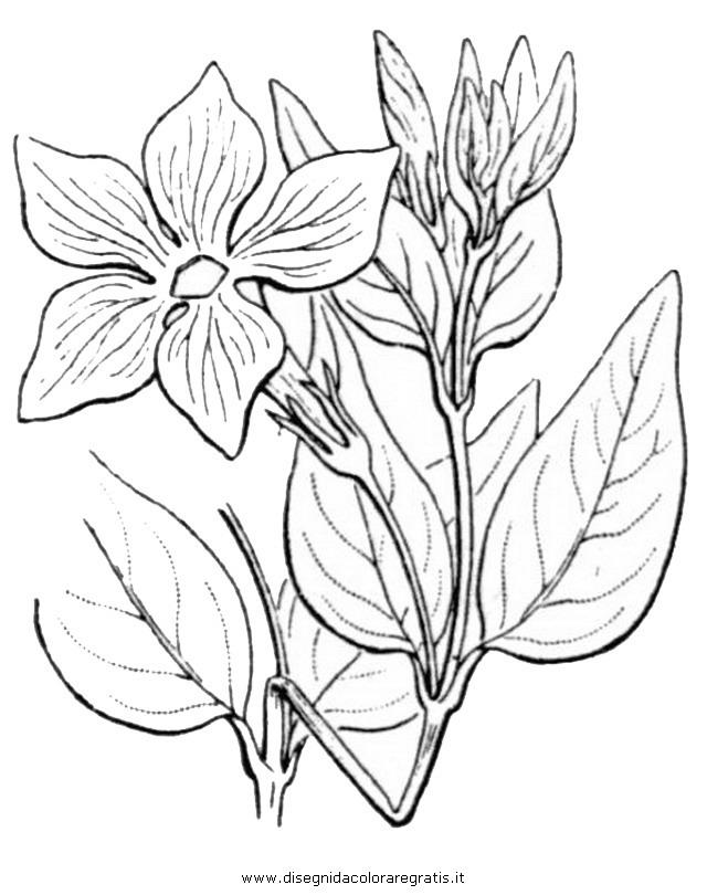 natura/fiori/pervinca-2.JPG