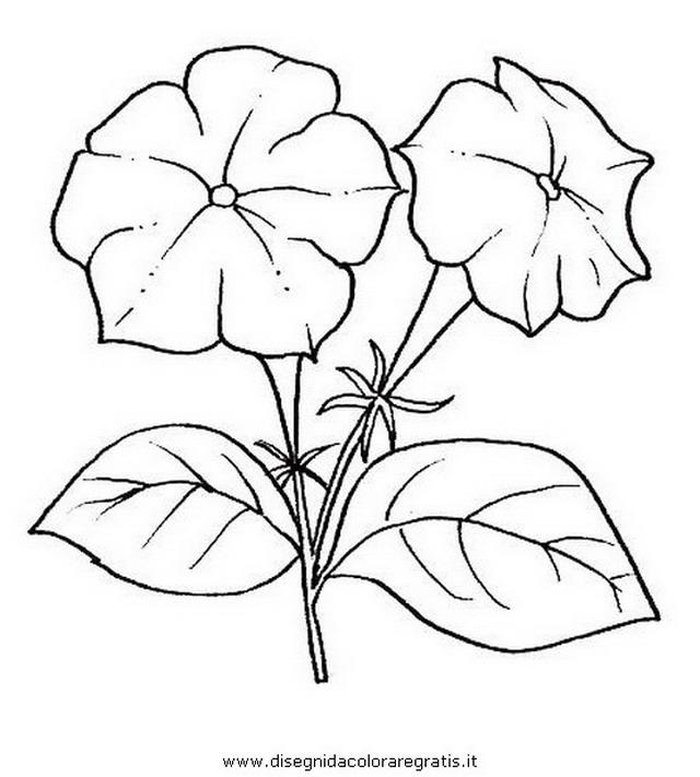 natura/fiori/petunia.JPG