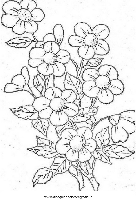 disegno primula 06 categoria natura da colorare
