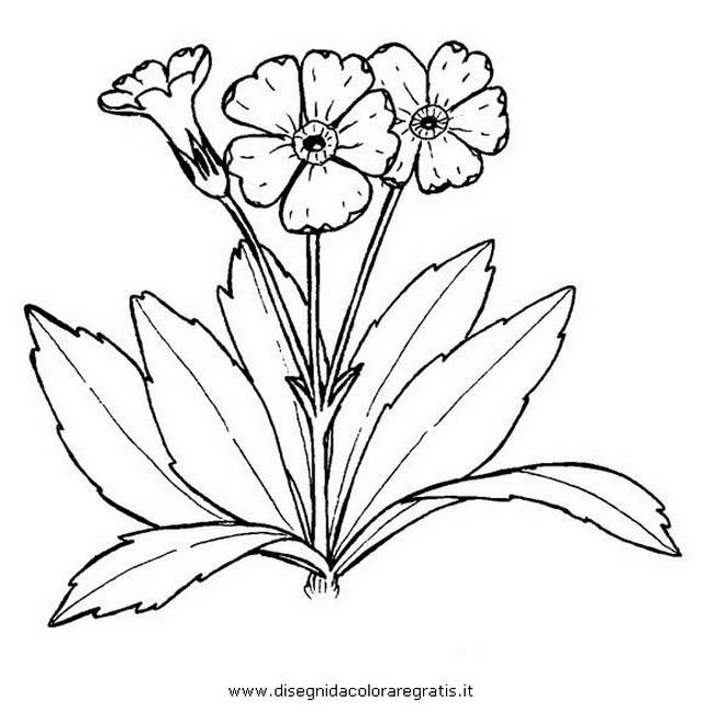 natura/fiori/primule_04.JPG