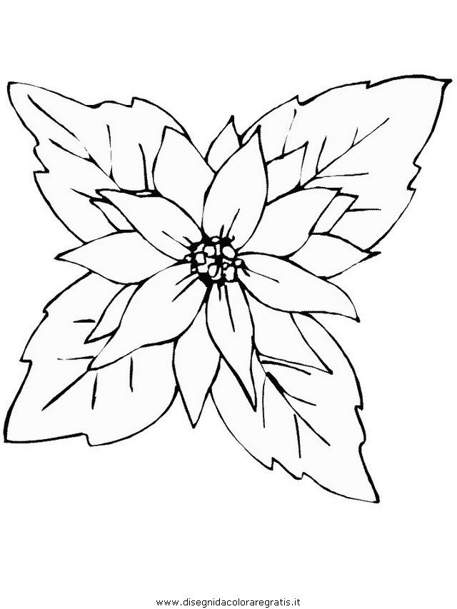 natura/fiori/stella_di_natale01.JPG