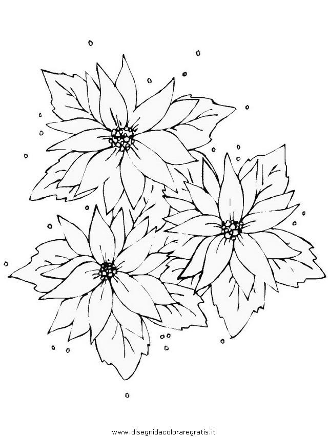natura/fiori/stella_di_natale02.JPG