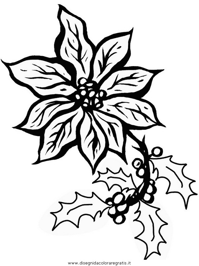Disegni Di Stelle Di Natale.Stella Di Natale Da Disegnare