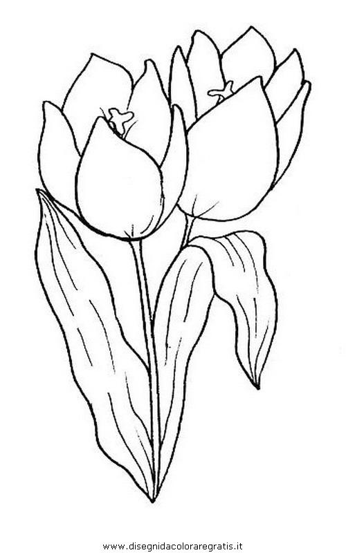 Disegno Tulipano Categoria Natura Da Colorare