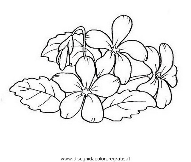 natura/fiori/viola.JPG