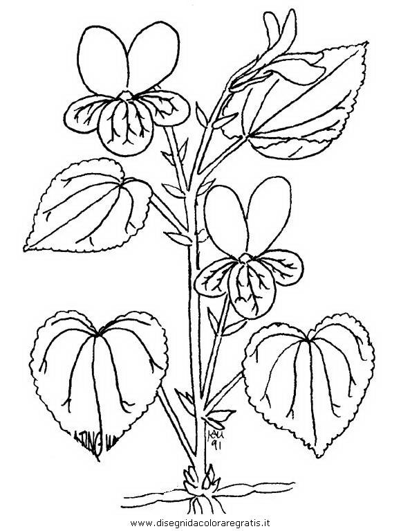 natura/fiori/viola_violetta_1.JPG