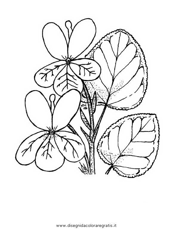 disegni da colorare fiori violette