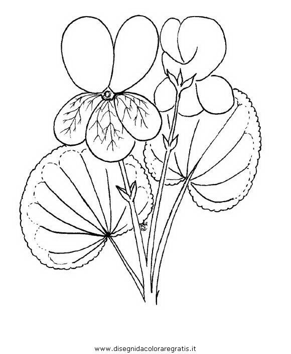 natura/fiori/viola_violetta_3.JPG