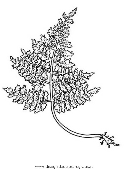 natura/foglie/felce_1.JPG