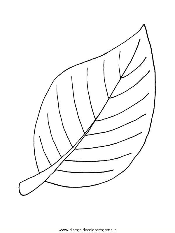 natura/foglie/foglie03.JPG