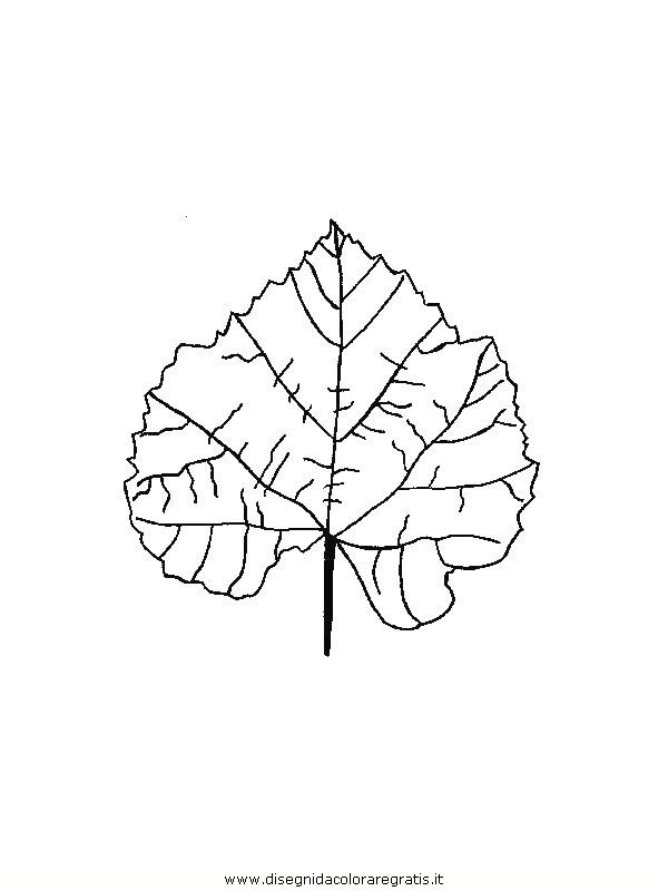 natura/foglie/foglie04.JPG