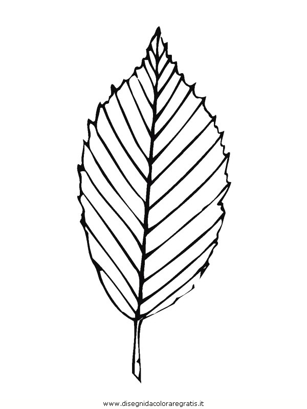 natura/foglie/foglie05.JPG