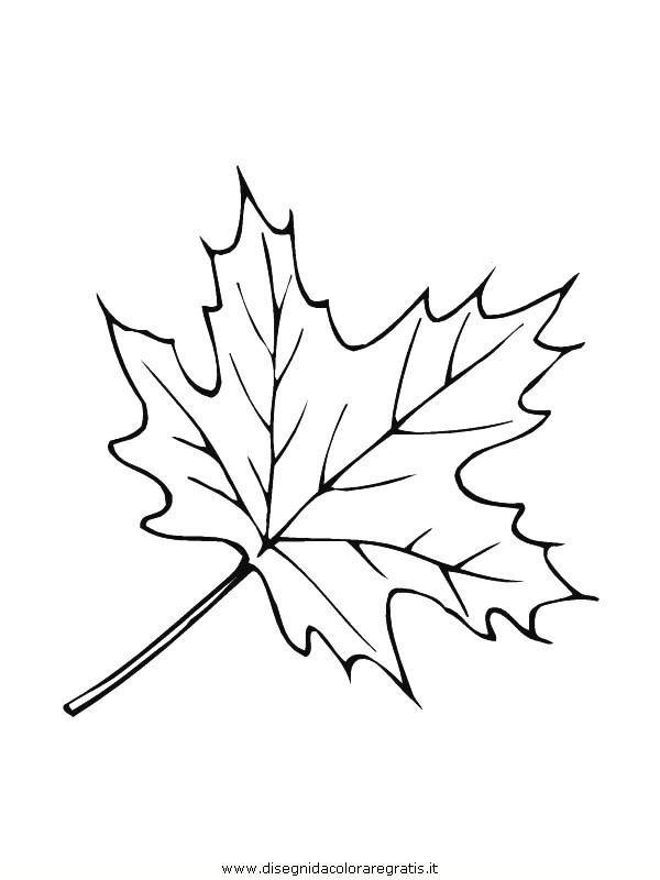 natura/foglie/foglie06.JPG