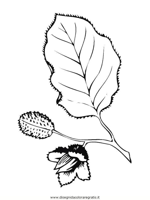 natura/foglie/foglie07.JPG
