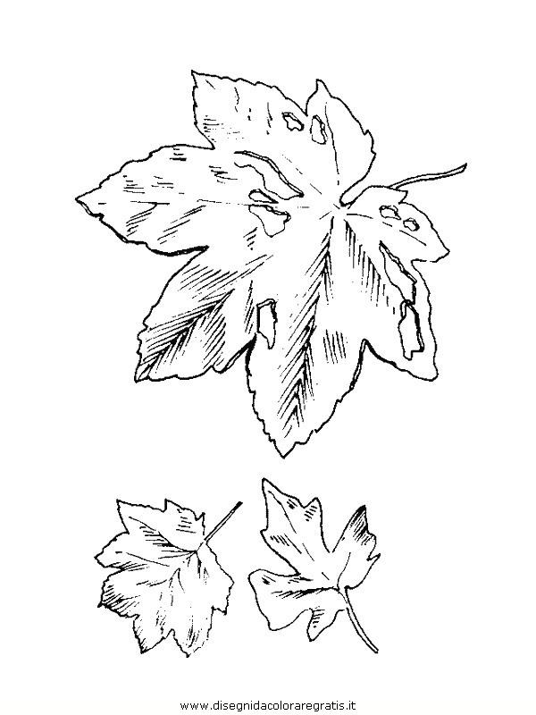 natura/foglie/foglie08.JPG