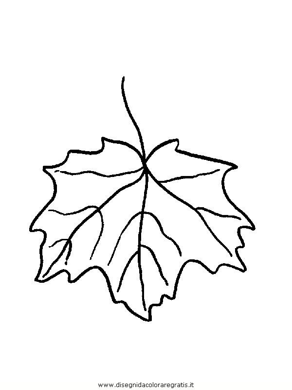 natura/foglie/foglie10.JPG