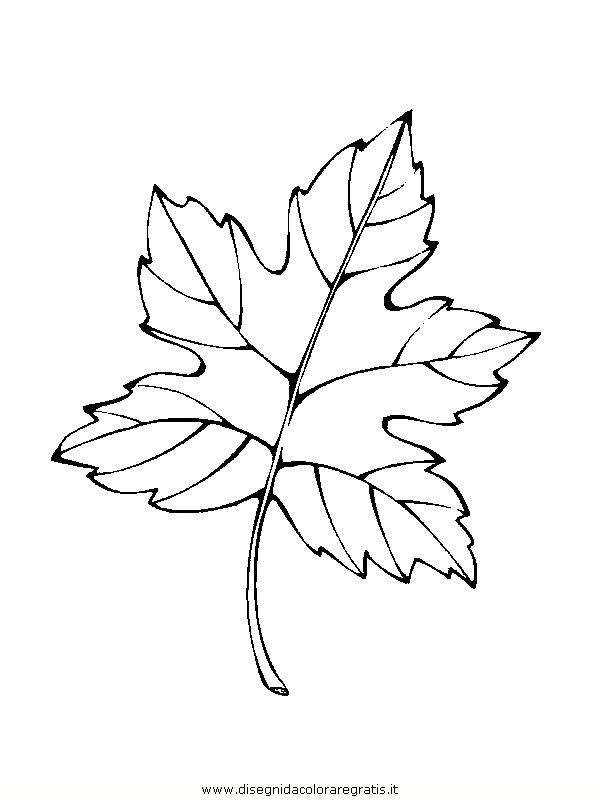 natura/foglie/foglie11.JPG
