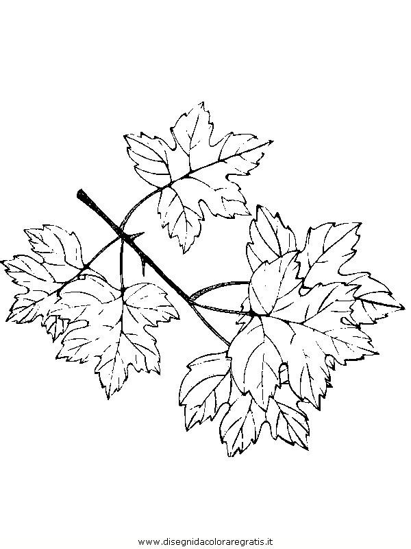 natura/foglie/foglie12.JPG