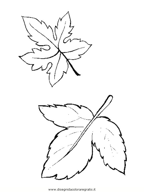 natura/foglie/foglie13.JPG