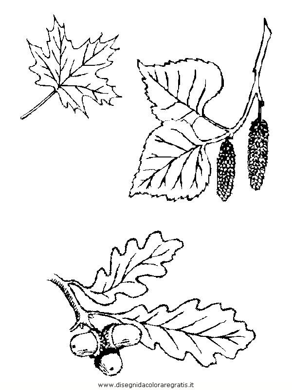 natura/foglie/foglie14.JPG